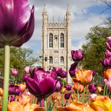 Memorial Union with tulips