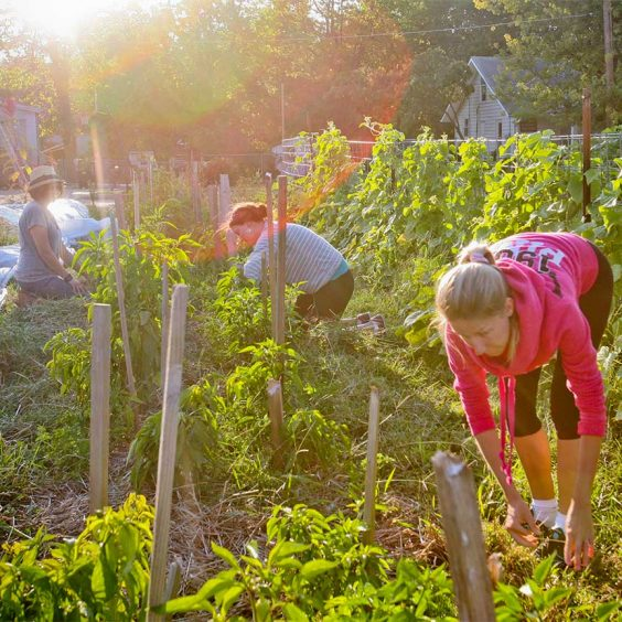 Women working in an urban farm